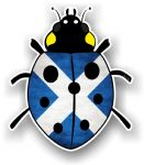 Ladybird Bug Design With Scotland Scottish Saltire Flag Motif External Vinyl Car Sticker 90x105mm